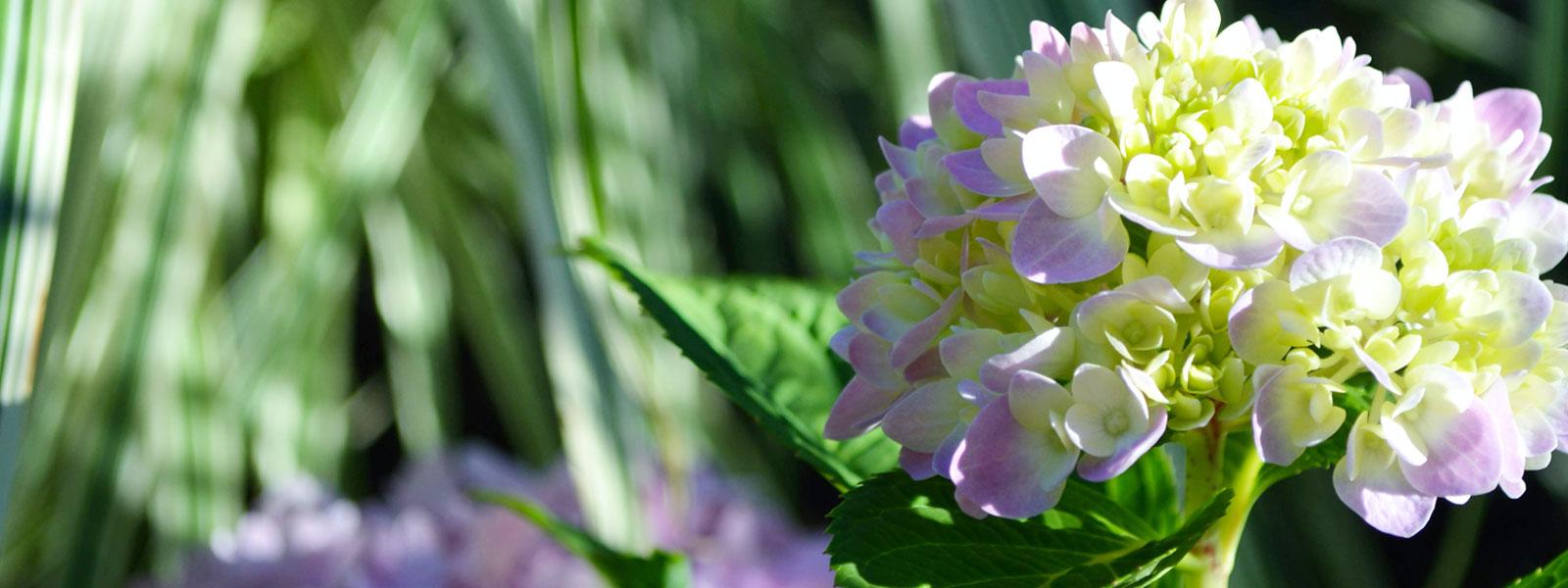layer-slider_flower